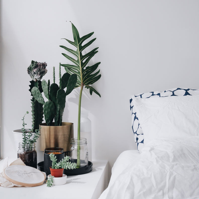 5 Indoor Plants That Are Easy To Keep Alive And Look Good